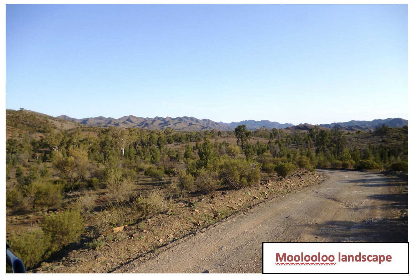 Moolooloo landscape